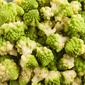 Food Service romanesco kaali