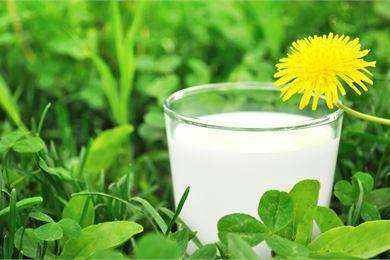 Maitotuotteet ja D-vitamiini