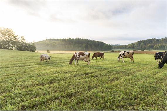 Vastuullisuus on työtä ympäristön, yhteiskunnan, ihmisten ja eläinten hyvinvoinnin parantamiseksi
